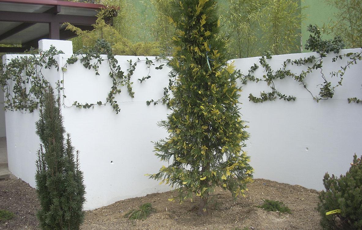 Creación de jardín en Alsacia