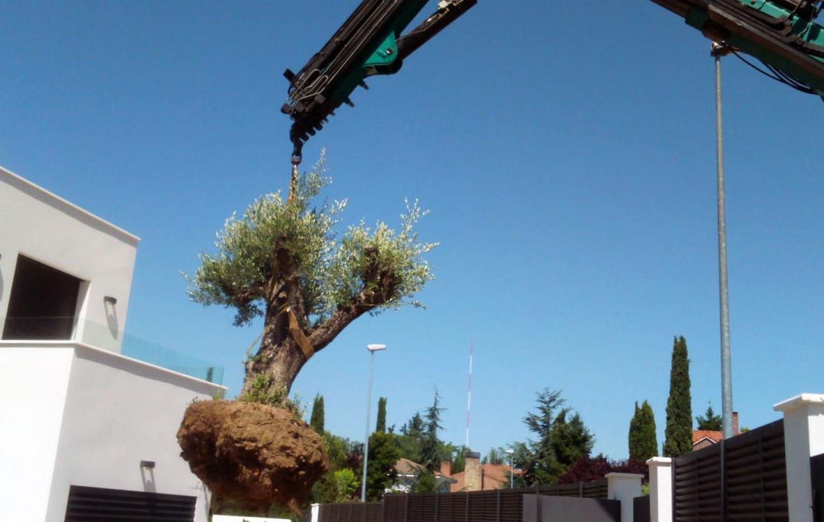Creación de jardín en vivienda unifamiliar